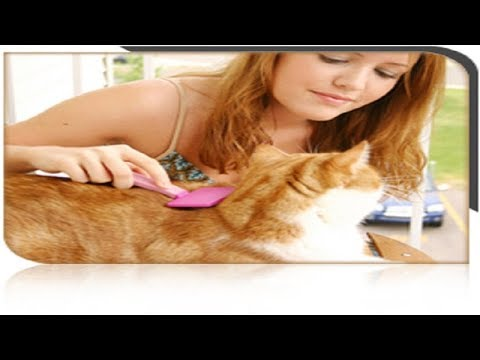 kittens! New best  TO train YOUR cats! Below the video