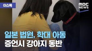 [이슈톡] 일본 법원, 학대 아동 증언시 강아지 동반 …