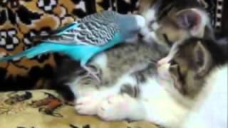 Попугай и котята (Parrot and kittens) - 4
