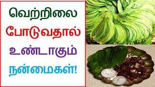 Health benefits of Betel and Areca nut | Tamil Dear