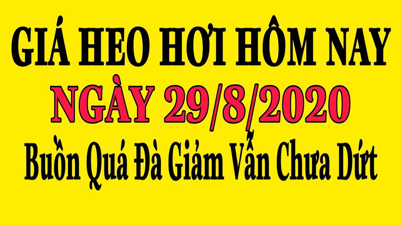 Giá Heo Hơi Hôm Nay 29/8/2020 | Giảm Từ 1.000 – 3.000đ/kg Trên Hầu Hết Các Địa Phương – Giá Mới VN