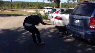 Train The Trainers Florida: Working With Percy, An Out Of Control Rescue Dog!