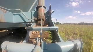 Potato harvesting 2017 Bulviakasis 2017 T-25 Bolko