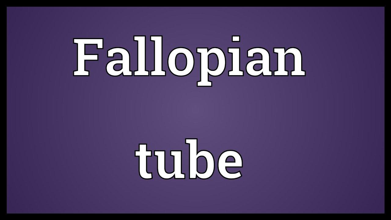 Fallopian Tube Meaning Youtube