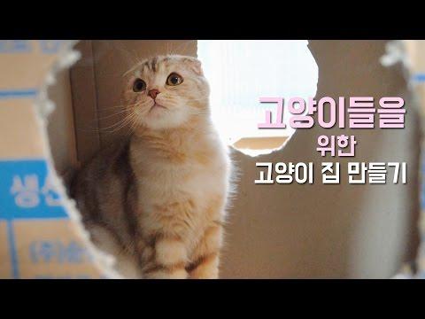 고양이들을 위한 집 만들기Making a House For the Cats [SURI&NOEL]