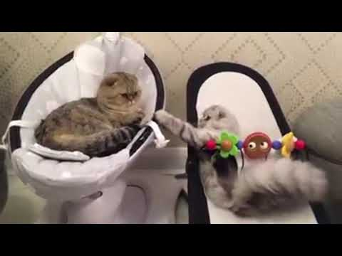 Most funniest and hilarious ANIMAL videos – Funny animal compilation – Laugh by watching