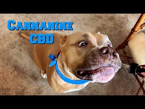 2020 S Best Cbd For Pets Cbd Oil For Cats And Dogs