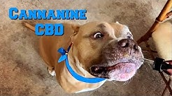 My Dogs Takes CBD   Product Review