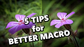 5 Tips for Better Macro Images with Compact Cameras and Ultrazoom (CZ/ENG subtit