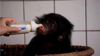 Город Киншаса! столица Конго!! The city of Kinshasa! the capital of the Congo !!(Приветствую! путешествуем по столицам стран виртуально! экономя при этом мани)) Вашему вниманию город Кинша..., 2014-09-14T06:49:41.000Z)
