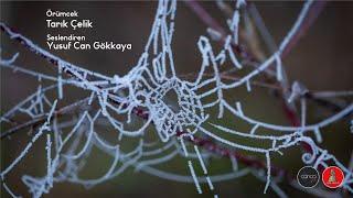 Tarık Çelik - Örümcek  I  Sesli Öykü