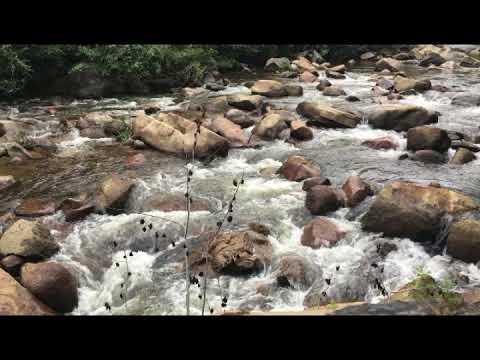 9 Hours of Rushing Mountain Stream Deep Sleep Sounds - Sierra Nevada Mountains for Meditation