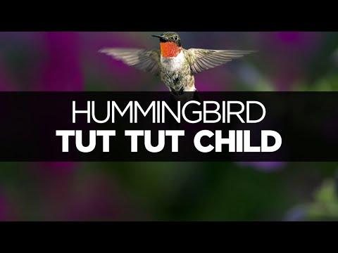 [LYRICS] Tut Tut Child - Hummingbird (ft. Augustus Ghost)