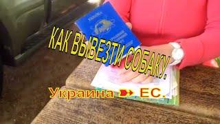Документы# Вывоз питомца из Украины в ЕС# Traveling with pets# From Ukraine to EC#