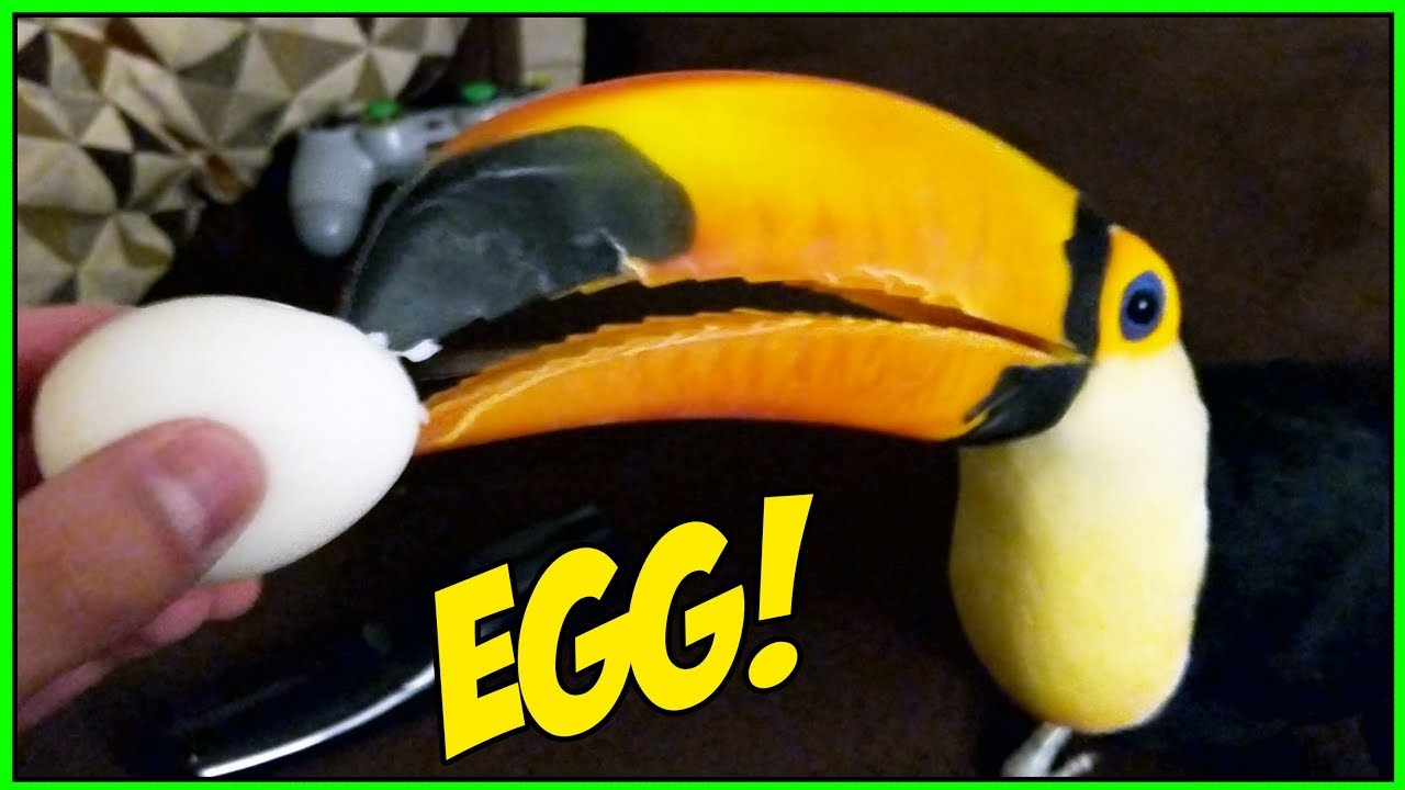 toucan-tries-a-hard-boiled-egg-for-the-first-time