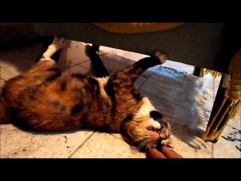 Twinkle Twinkle Little Star Cats Meow Version Singing Cats from YouTube · Duration:  42 seconds