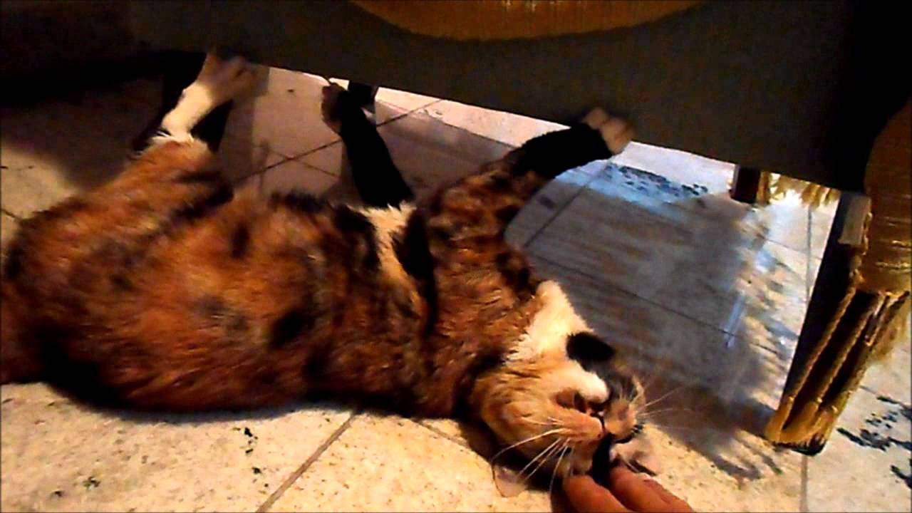 Cat Sharpening Its Claws on the Couch - YouTube