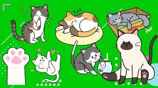 Cute cats green screen