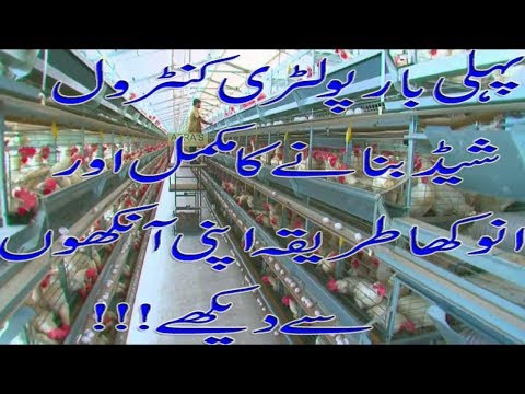 Poultry farming in Pakistan | Make Money from Poultry | Inside Controlled Poultry farm | Live Video