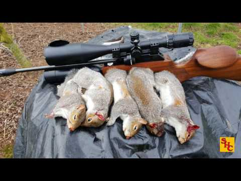 Pest Control with Air Rifles - Squirrel Shooting - First Visit to a New Permission