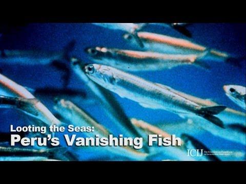 Peru's Vanishing Fish