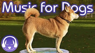 Download Soothing Classical Music for Dogs - Relax Your Dog with 15 Hours of Lullabies! Mp3 and Videos