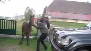 Sauvetage 3 chevaux à Neuchâtel (CH)