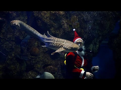 شاهد: زيارة لسانتا كلوز داخل حوض للأسماك في متحف مالطا الوطني…  - نشر قبل 2 ساعة