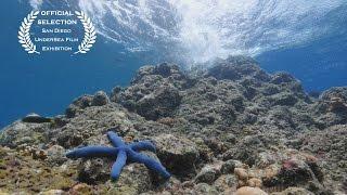 Living Colour - Underwater 4K Video