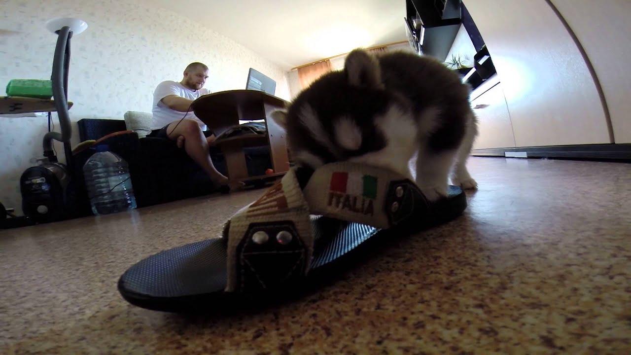 Resultado de imagen para хаски shoes