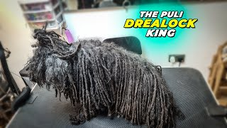 The Puli  Mop Dog GROOMING Transformation   Pet   Dog Grooming   The Dog