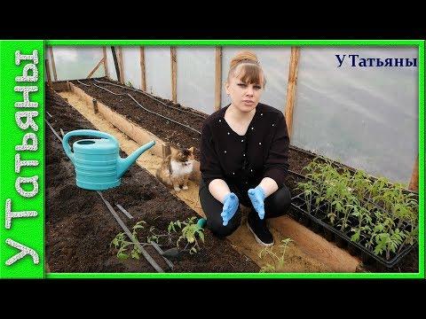 УРА!!! Тепличный сезон начался!) Высаживаю рассаду томатов в теплицу...