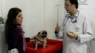 Hospital Veterinário Sena Madureira - TV Gazeta - Cuidados com o seu cão na Copa do Mundo