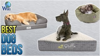 видео beds for small dogs
