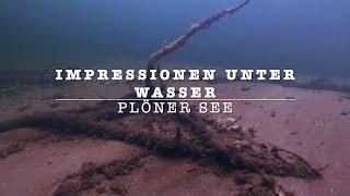 Tauchen in Schleswig Holstein 3. Plöner See, Impressionen unter Wasser