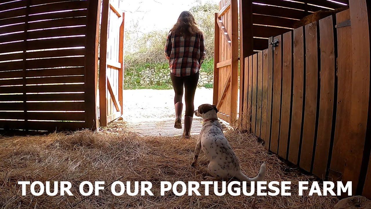 TOUR OF OUR PORTUGUESE FARM - HOMESTEAD IN FUNDAO CENTRAL PORTUGAL