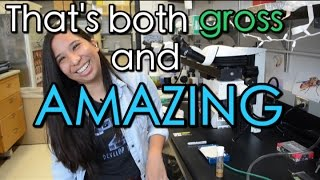 Fruit Fly Guts with Leslie! | Lab Next Door