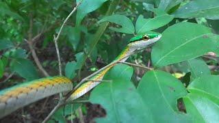 Snake attack bird