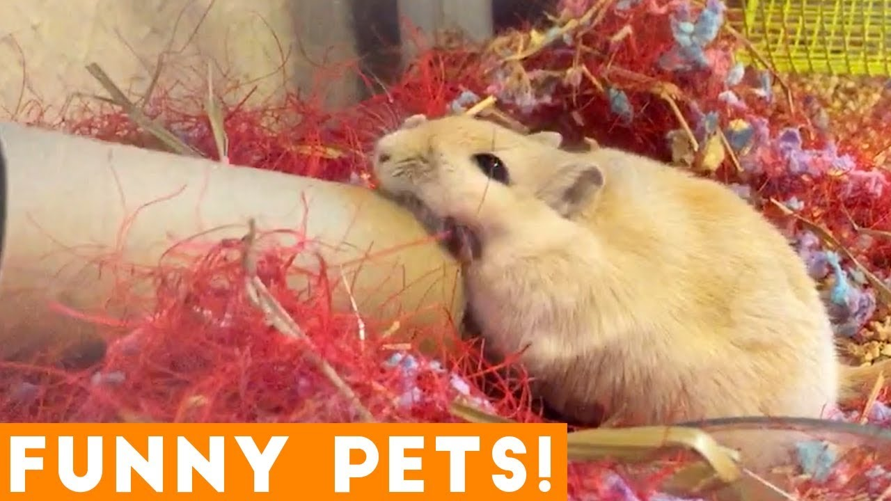 Funniest Pets & Animals of the Week Compilation June 2018 | Hilarious Try Not to Laugh Animals F