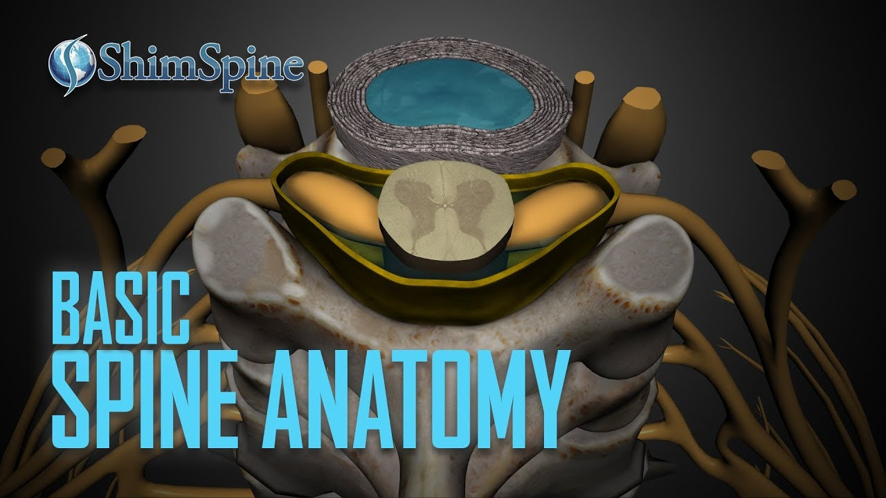 Basic Spine Anatomy Youtube