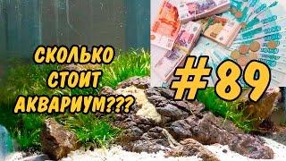 #89 СКОЛЬКО СТОИТ АКВАРИУМ? HOW MUCH IS THE FISH TANK?