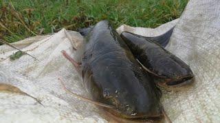 Рыбалка Сети на 4часа Заброшеная Тонь