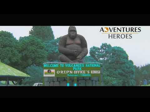 Uganda The Place to visit on African Safari . Meet Gorilla The Leading Tour Operator from Tanzania