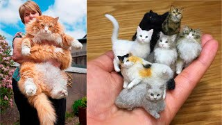 Why Cats make the Best Pets #1