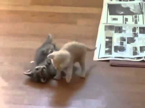 how to break up a cat fight properly