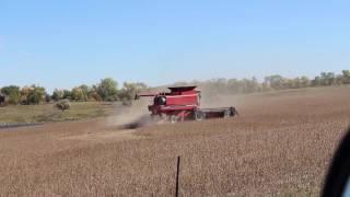 harvesting soybeans case ih 1680 cummins diesel combine 1992