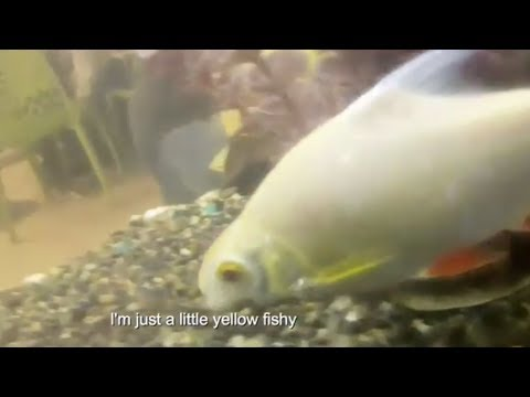 The Singing Fishes by Austyn Goveas | 9GAGFunOff