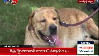 Dogs Funny Play on Dogs Day Out : TV5 News