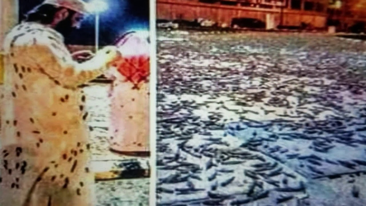 "Breaking ""Locust Plague Hits Mecca"" - YouTube"