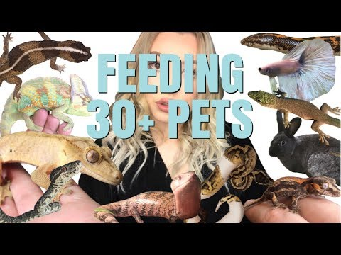 feeding-all-of-my-pets!-|-routine-for-30+-pets